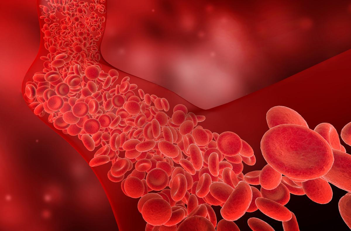 O corpo humano tem mais de 96 mil km de vasos sanguíneos.